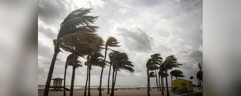 Palm trees bending in a hurricane