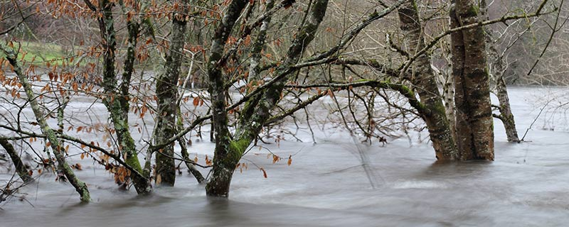 Bare trees in a flood.